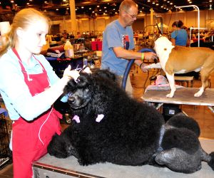 37th Annual Houston World Series of Dog Shows