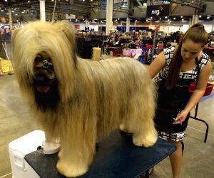 U.S. HOUSTON DOG SHOW