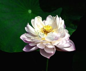 28th National Lotus Flowers Exhibition at Jinhu County in Huai'an
