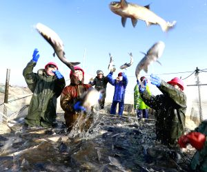 CHINA-JIANGSU-FISH-HARVEST