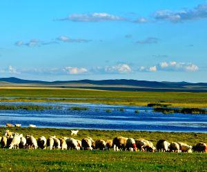 Hulun Buir: Grassland