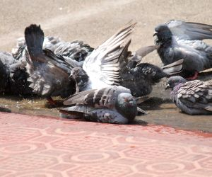 Birds beat the heat
