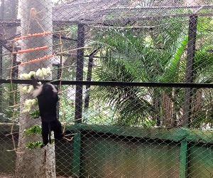 Free Photo: I-Day theme based food served to Bengaluru zoo animals