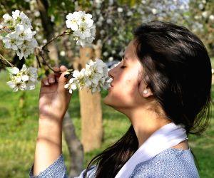 Pakistan-islamabad-spring-flowers