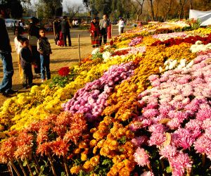 Islamabad (Pakistan): People visit the Chrysanthemum and Autumn Flowers Show