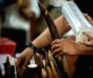 INDONESIA JAKARTA IVORY SMUGGLING