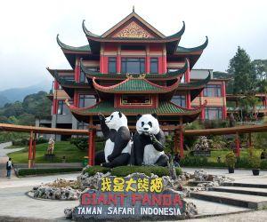 INDONESIA-TAMAN SAFARI INDONESIA-CHINESE GIANT PANDAS
