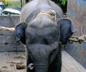 A baby Rhino and an elephant arrive at Alipore Zoological Gardens