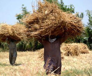 PAKISTAN LAHORE AGRICULTURE
