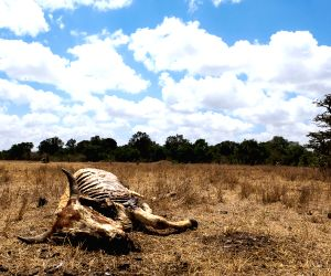 Droughts and their Destruction!! Photos showing the sad reality of Drought stricken areas!!