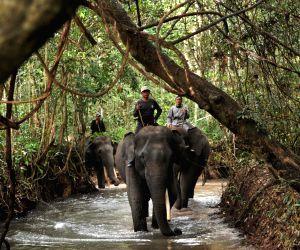INDONESIA-LAMPUNG-ELEPHANT