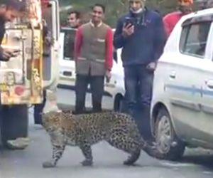 Leopard 'plays' with moto