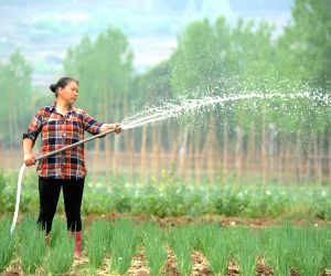 CHINA GUIZHOU GUYU AGRICULTURE