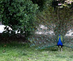 United States-los Angeles-county Arboretum And Botanic Garden