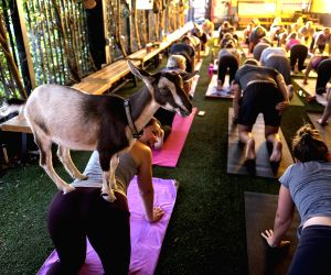 "U.S.-LOS ANGELES-""GOAT YOGA"