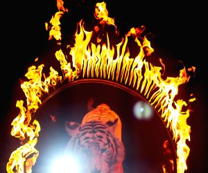 Mexico City: Mexico issued a ban that prohibits circuses from using animals