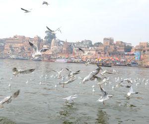 Migratory birds on the banks of Ganga