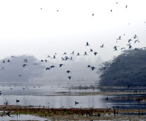 Migratory birds at Sultanpur National Park