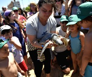 Montevideo (Uruguay): Volunteers release turtles and cleaning the beaches in Montevideo