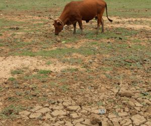 Why solving Bundelkhand's water crisis is an annual mirage