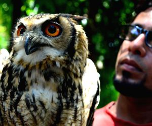 Owl recovered from Powai