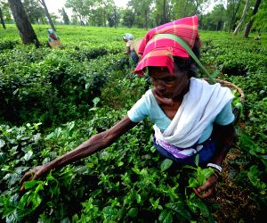 In Assam 46.93% believe living standards will improve