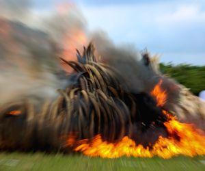 KENYA NAIROBI IVORY BURNING