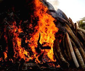 KENYA NAIROBI CONTRABAND IVORY BURNING