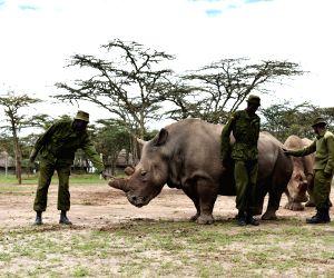 KENYA-OL PEJETA CONSERVANCY-NORTHERN WHITE RHINO