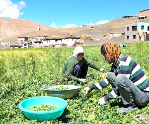 Himachal adapting to low-cost farming the natural way