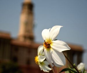 Flowers bloom along the Rajpath