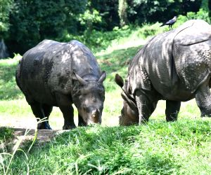 World Rhino Day - One horned rhinos at Assam State Zoo