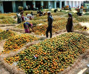 Oranges flood Kalmana wholesale market