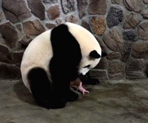 CHINA SICHUAN CHENGDU PANDA TWINS