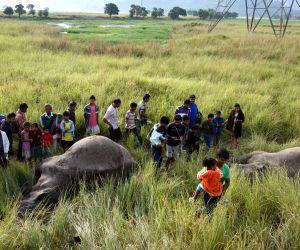 Train kills two elephants in Assam