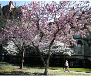 U.s.-philadelphia-spring-blossom