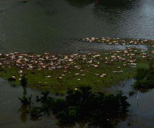 CHINA GUANGXI RAINSTORM PIG FARM FLOOD