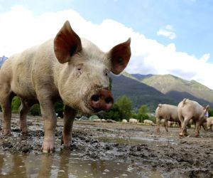 IPC plans to prevent abnormal toxicity test on animals