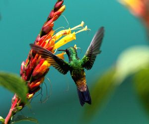 TRINIDAD AND TOBAGO ARIMA ENVIRONMENT HUMMINGBIRD