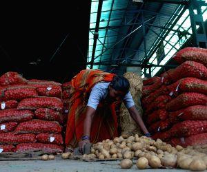 File Photo: Potato