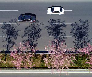 CHINA FUJIAN QUANZHOU KAPOK FLOWERS