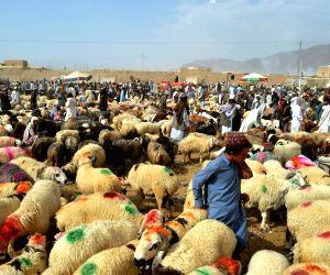 PAKISTAN-QUETTA-EID AL-ADHA-LIVESTOCK MARKET