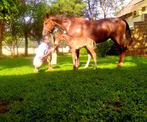 Free Photo:  Randeep Hooda names newborn foal Hope after his mother Asha