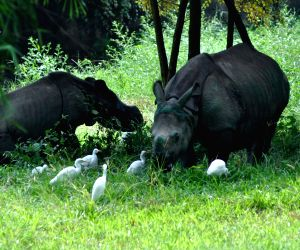 Rhinoceros relocated to Assam State Zoo