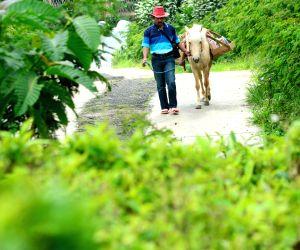 INDONESIA PURBALINGGA HORSE MOBILE LIBRARY