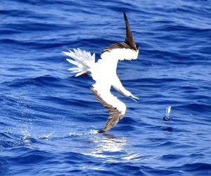 CHINA HAINAN FLYING FISH