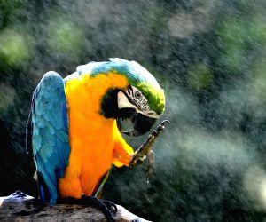 CHINA SHANGHAI ANIMAL SUMMER HEAT