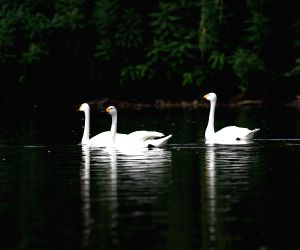 Bird Islands Forestry Park