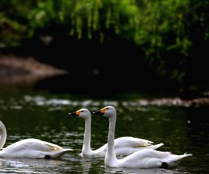 Bird Island Wildlife Park