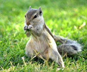 File Photo: Squirrel